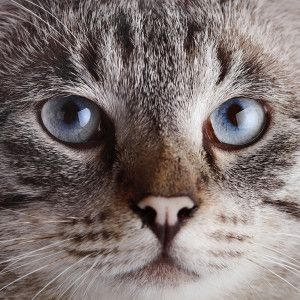 Your Guide to Caturday by Fetch! Pet Care