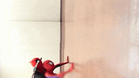 Can't Beat Spider-dog