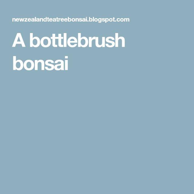 A bottlebrush bonsai