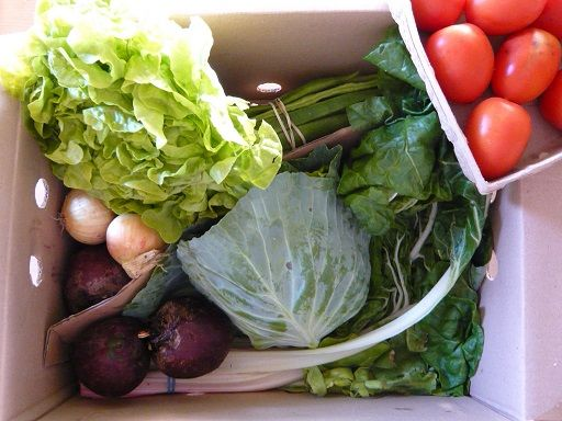 Mixed organic vegetables box. No shipping costs to deliver it at home freshly picked from the field. 5 Kg box.