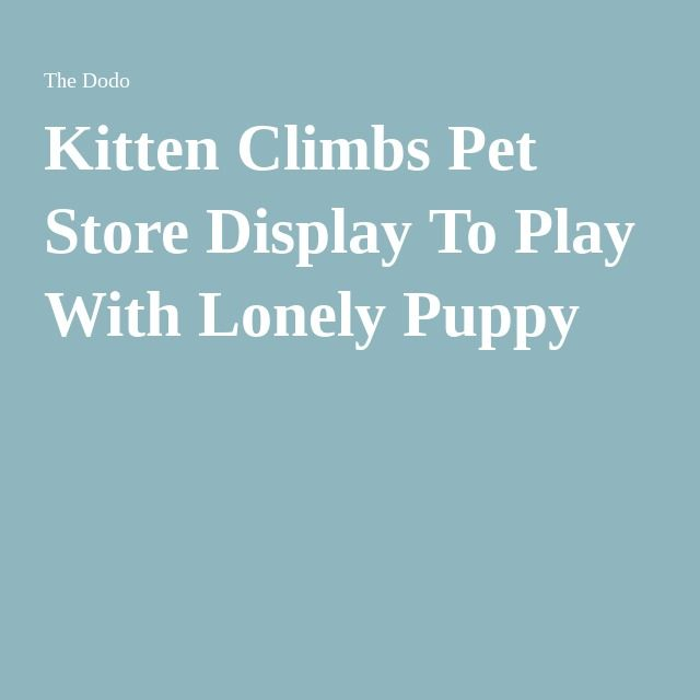 Best Pet Store Display Ideas On Pinterest Pet Shop Pet - Kitten escapes pet store display to join lonely puppy