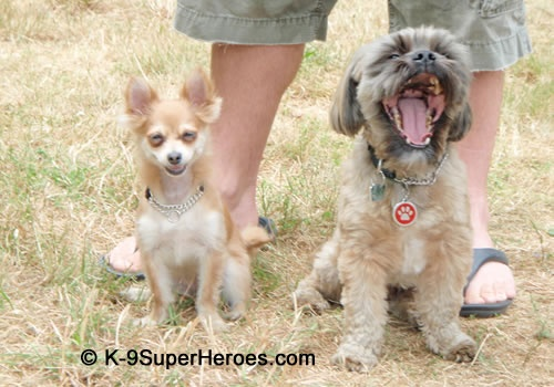 OMD! You kill me...tell me another one! http://www.K-9SuperHeroes.com
