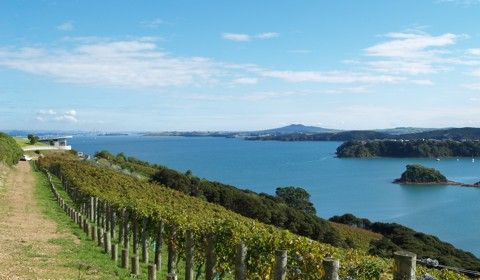Te Whau Vineyard Waiheke Island - fabulous, setting great food.