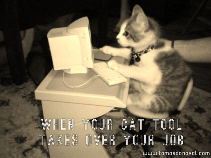 When your favourite cat tool takes over your job.