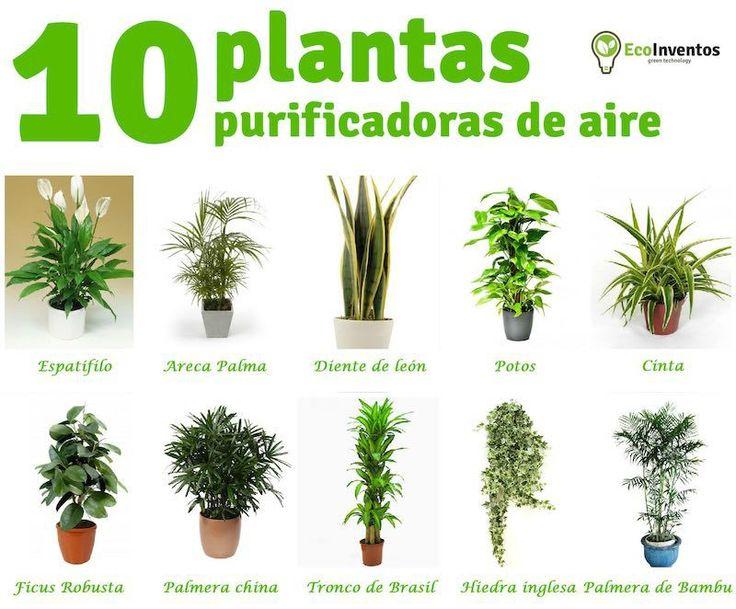 10 plantas que purifican el aire de tu casa jardineria for Plantas decorativas para oficina