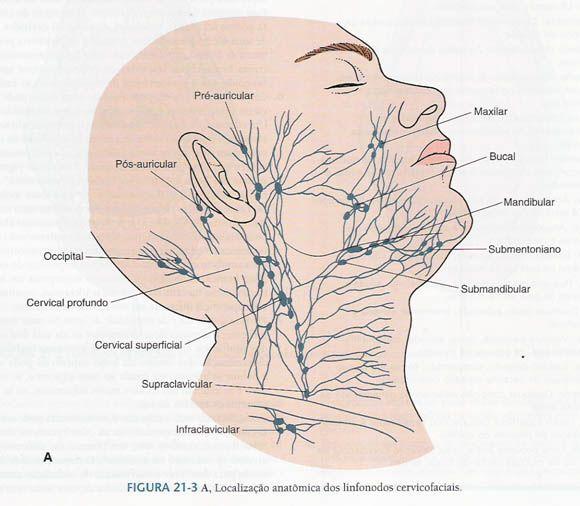 Resumos de Odontologia, o melhor blog com esse tipo de conteúdo.