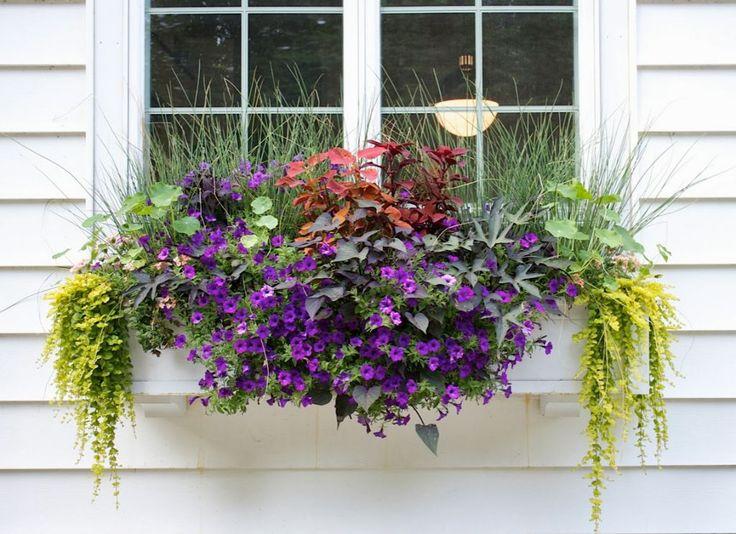 257 best gardening pots,patio window boxes images on pinterest ... - Patio Flower Boxes Ideas