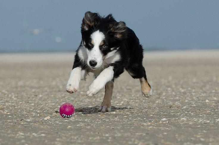 Hola amigas y amigos de Farmacia Palomeque. Queremos invitaros a leer nuestro último artículo acerca de la convivencia con la alergia a los perros. Con una serie de cuidados podremos seguir jugando sin molestias con nuestro mejor amigo. http://farmaciapalomeque.es/blog/la-convivencia-con-la-alergia-a-los-perros/