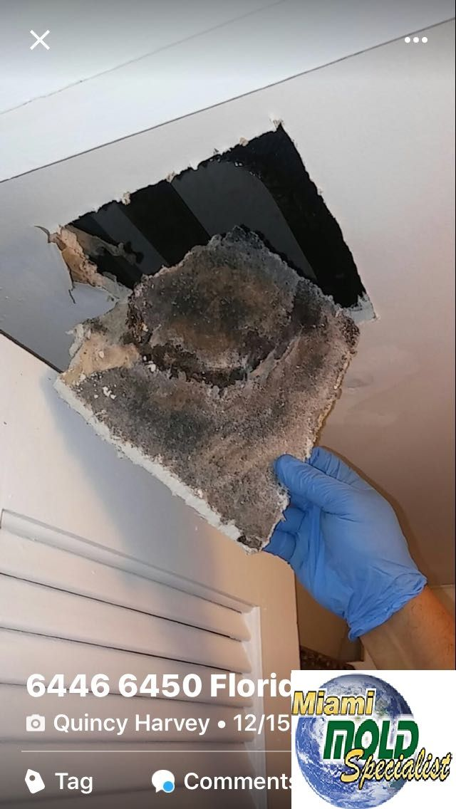 If you suspect a #mold or #mildew problem in your home or building, or can see mold growth on #walls or #ceilings, contact Miami Mold Specialist for #Mold #Removal in Miami and Fort Lauderdale. For a FREE mold removal estimate and consultation, Contact Us or Call Us at 305-763-8070.