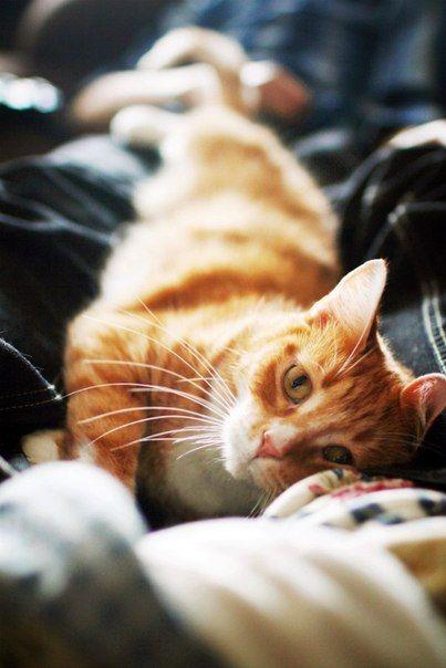 Мурлыканье кошек мне нравится больше, чем пустые слова людей.