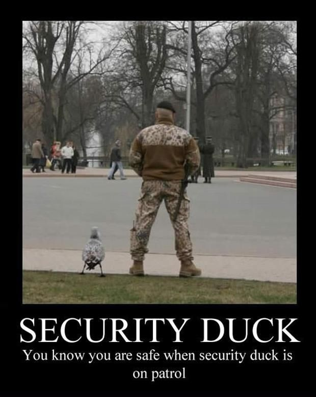 Army Security Duck Guard | Funny pictures with captions ...