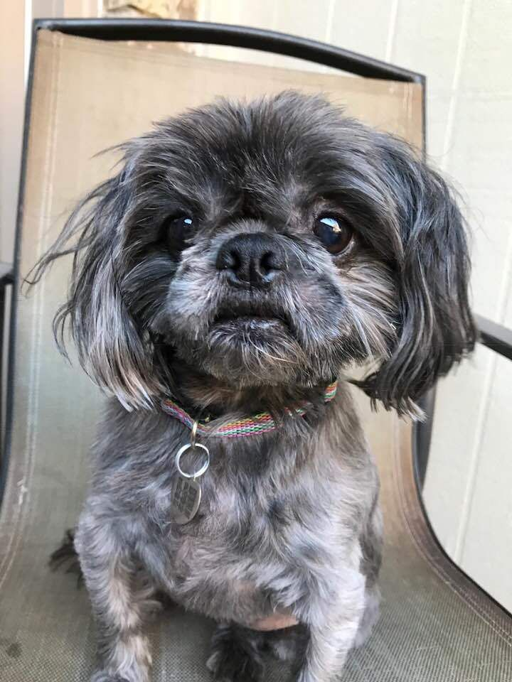 Adopt Bonita On Cute Cats Dogs Cute Baby Dogs Shih Tzu