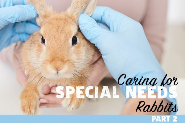 Part 2 of our special needs series: The Sitz Bath, and more tips and tricks.  Read it all here: https://smallpetselect.com/uncategorized/special-needs-rabbits-2
