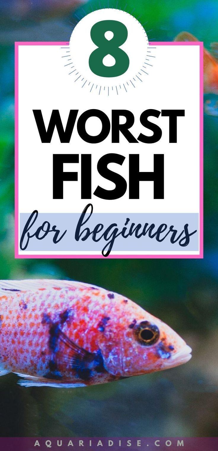 The 8 Worst Beginner Fish Aquariadise In 2020 Fishing For Beginners Best Aquarium Filter Aquarium Store