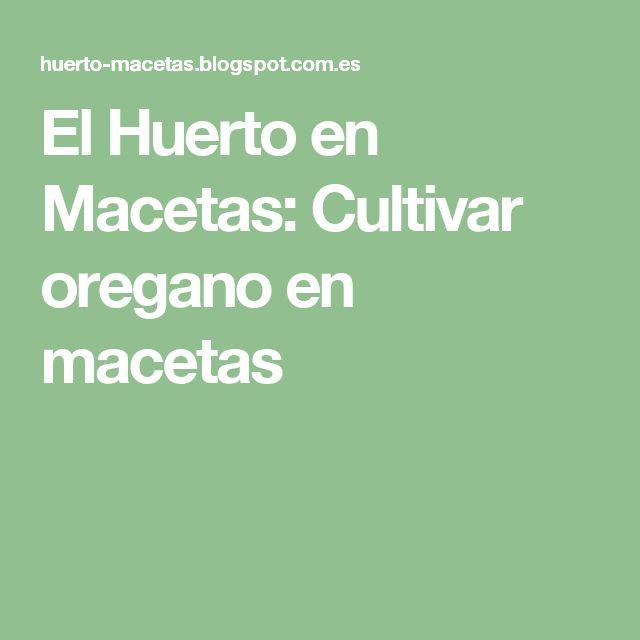 El Huerto en Macetas: Cultivar oregano en macetas