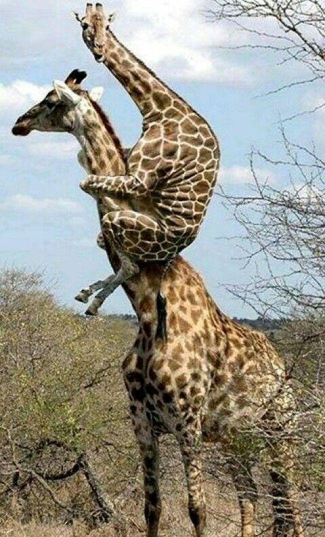 Best OnFunClub Images On Pinterest - 25 hilariously unexplainable images