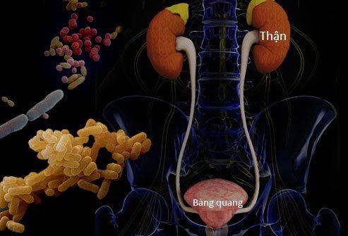 Để giải đáp thắc mắc bệnh nhiễm trùng đường tiểu có nguy hiểm không? bạn đọc hãy tham khảo những thông tin chia sẻ dưới đây