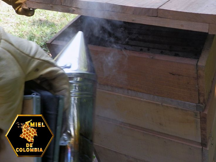 Para la práctica de la apicultura, el apicultor necesita de una serie de elementos y herramientas. Ahumador Pinza o palanca para manejo de cuadros Cepillo para desabejar Traje de apicultura Elementos para la extracción de la miel Elementos para la fundición de la cera Rejilla excluidora de reinas Cera estampada Piquera Trampa cazapolen Trampa para propóleos