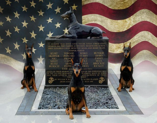 DPCA | The Doberman | Breeder Referral