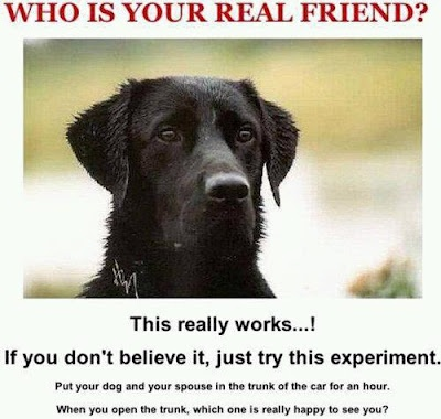 LOL a little humor found on the net.Truths Hurts, Dogs, Best Friends, The Real, Demotivational Posters, Funny Stuff, Real Friends, Challenges Accepted, True Stories