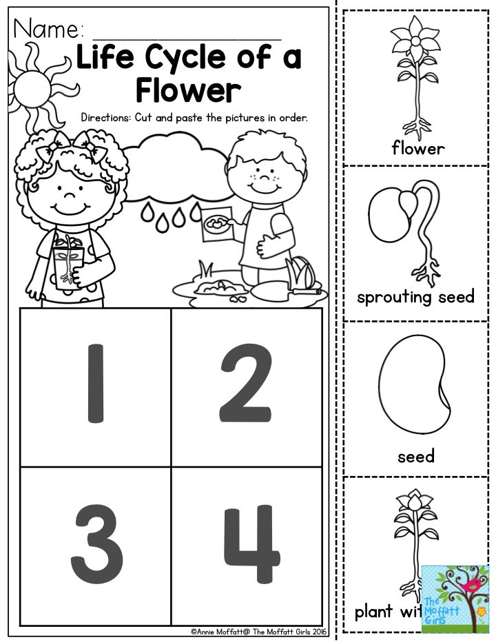 Life Cycle of a Flower- Students love to learn about how things begin and change over time. This activity would be great do do along with sprouting beans in a baggie!
