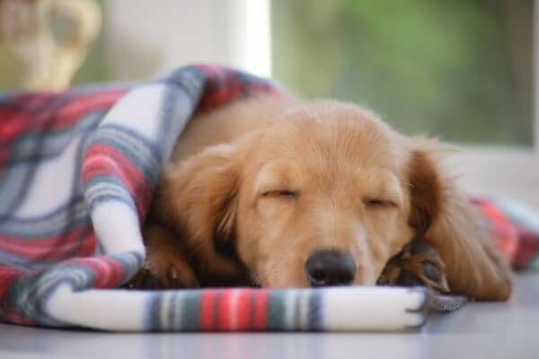 ペット用の湯たんぽおすすめランキング5選 タイプ別で紹介 Inunavi いぬなび ペット いぬ 犬