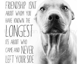 47 best images about pitbulls on Pinterest | Pit bull ...