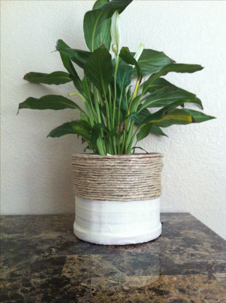 Coffee container, DIY flower pot, recycled Folgers coffee container.