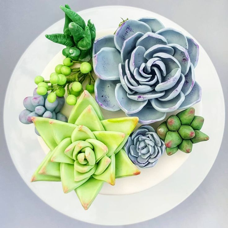 "Just listed the cutest succulent sets on etsy! #ihaveathingforsucculents #edibleart #succulentcake…"""