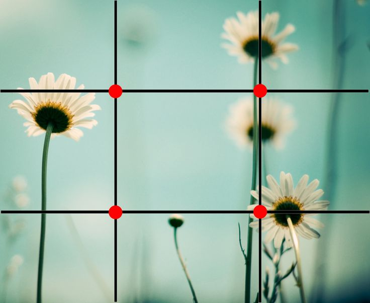 The Rule of Thirds | Pretty Presets for Lightroom