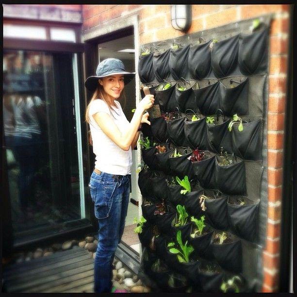 Feliz con mi huerto vertical organico sinpesticidas - Huerto vertical ikea ...