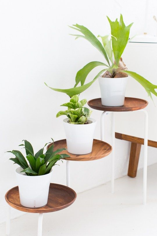 DIY ACACIA WOOD PLANT STAND | Sugar & Cloth