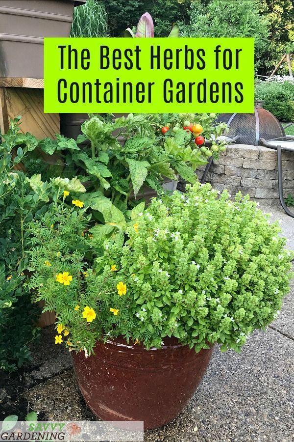 28700a0314638e50eb10bd69fe896440 - Is Castor Oil Safe For Vegetable Gardens
