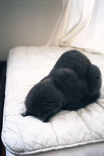 Sleep  Hahahahahaha