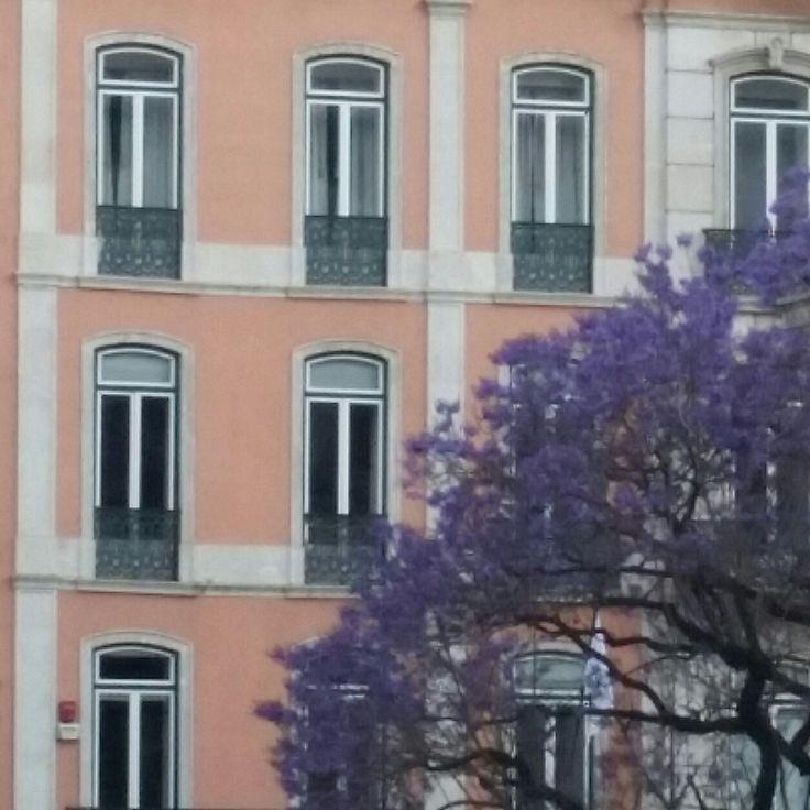#Jacaranda Tree. #Lisbon
