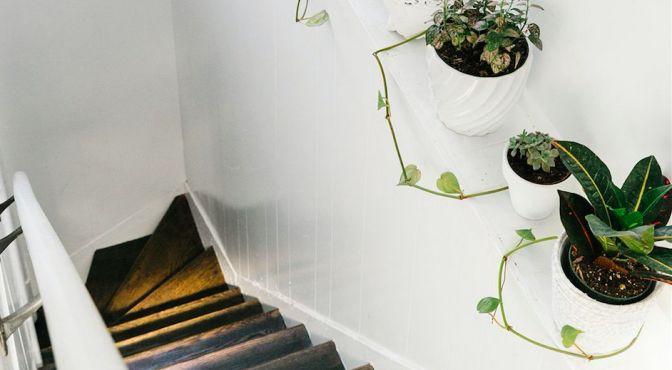hal met planten