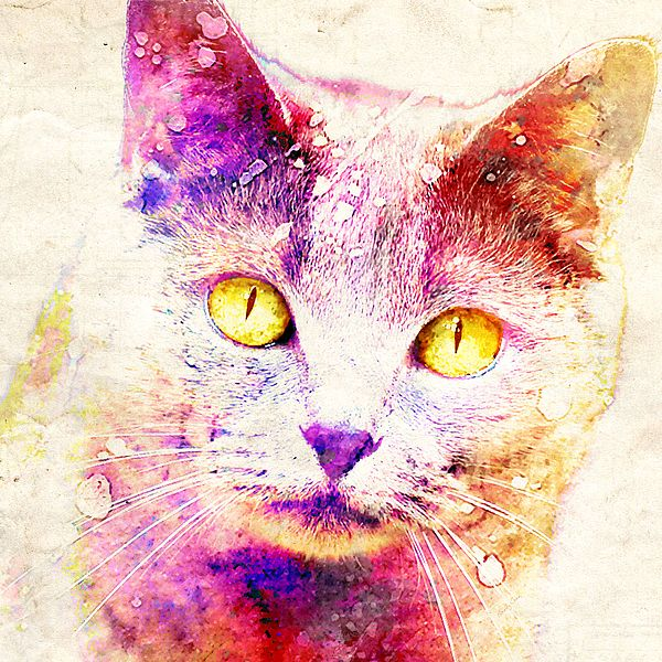 Crazy for Cats  Copyright © 2015 Stacey Chiew. All rights reserved.