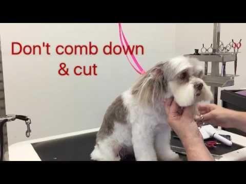 Sue Wright - dog grooming - Maltese cross shihtzu face - YouTube