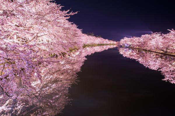 Hirosaki Park Hirosaki Aomori Japan Cherry Blossom Cherry Blossom Japan Japan
