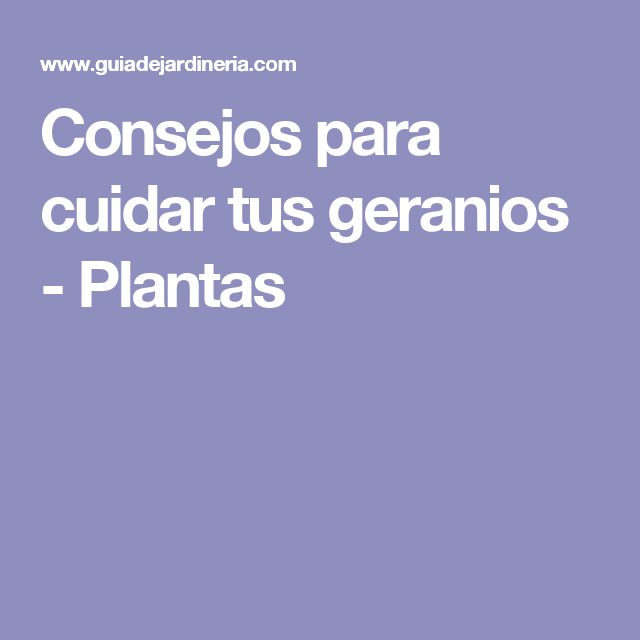 Consejos para cuidar tus geranios - Plantas