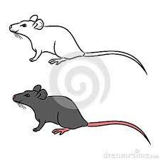 tatuaż szczur - Szukaj w Google