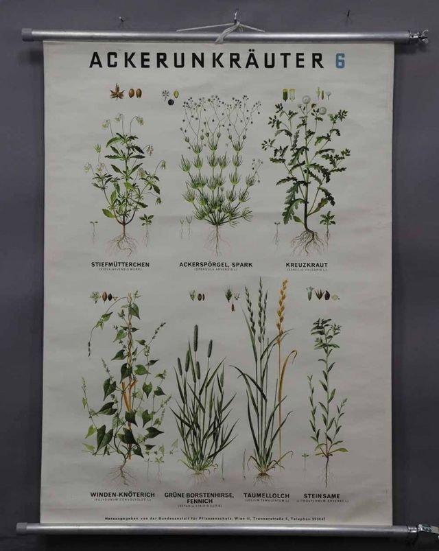 Spectacular Favorite Botanical Illustrations Our Best Sources for Vintage and New