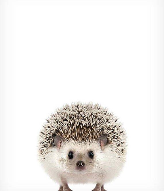 Hedgehog print, Child animal prints, The Crown Prints, Woodland nursery decor, Woodland animals, Child room wall decor, Nursery artwork