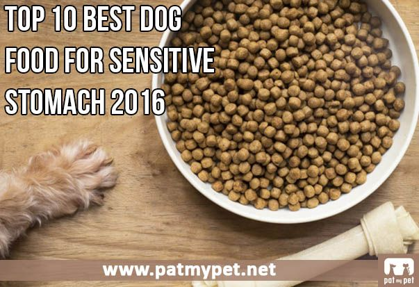 Best Dog Food Boxer Sensitive Stomach