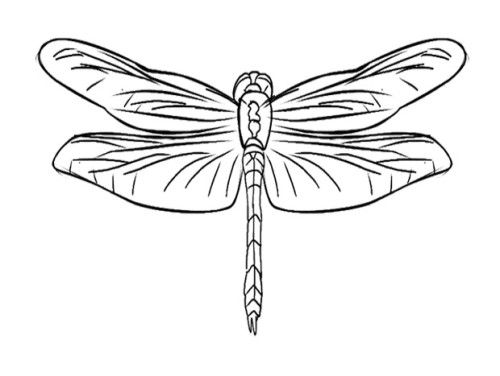 74 best Printables images on Pinterest Dragonfly art