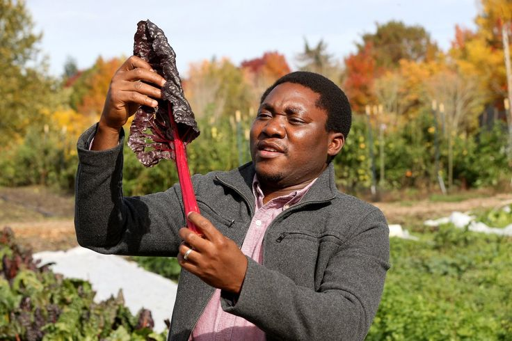 Cornelius Adewale, a Ph.D. candidate at Washington State University who is from Nigeria, has won the Bullitt Foundation's environmental prize for 2017 for his leadership role in developing an app and web tool that can measure a farm's carbon footprint and help farmers reduce the impact of that footprint. (Greg Gilbert/The Seattle Times)