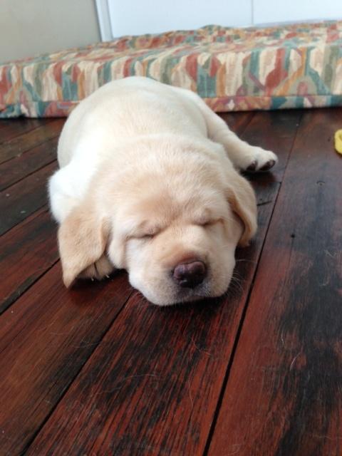 Tiring being a puppy
