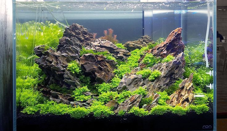Nature aquarium after a week from installation by Diego Marinelli