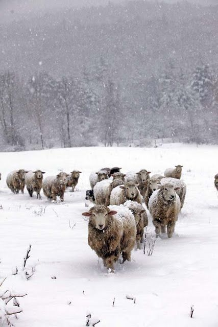 Dressed in their woolens for the snow