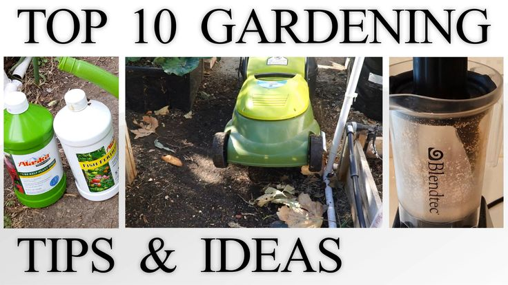 10 Gardening Tips